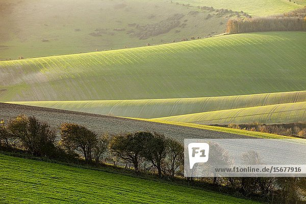 Autumn morning in South Downs National Park near Brighton  East Sussex  England.