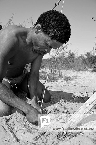 Naro-Bushmen near Ghanzi in the Central Kalahari of Botswana digging in the sand to pull out an ostrich egg filled with potable water.