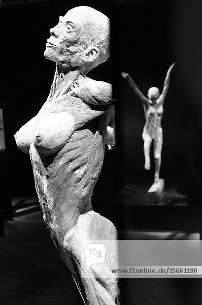 Zürich: Gunten Von Hagens highly controversial  bizarr but also fascinating exposition 'Körperwelten' (bodyworlds) presented in 'Puls 5' in 2010.