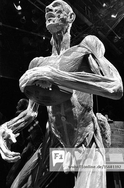 Zürich: Von Hagens highly controversial  bizarr but also fascinating exposition 'Körperwelten' (bodyworlds) presented in 'Puls 5' in 2010.