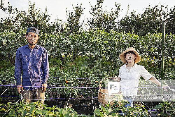 Japanischer Mann mit Mütze und Frau mit Hut stehen im Gemüsefeld und lächeln in die Kamera.