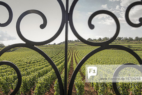 Scenic vineyard view behind scroll railing  Beaune  Burgundy  France