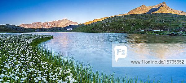 Panoramic of Monte Gavia mirrored in Lago Bianco surrounded by cotton grass  Gavia Pass  Valfurva  Valtellina  Lombardy  Italy  Europe