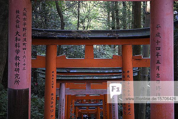 Japan  Präfektur Kyoto  Stadt Kyoto  Kanji auf den Torii-Toren  die zum Fushimi Inari-taisha-Tempel führen