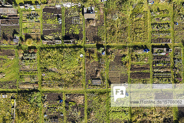 Deutschland  Bayern  Geretsried  Luftaufnahme der Reihen von Gemeinschaftsgärten