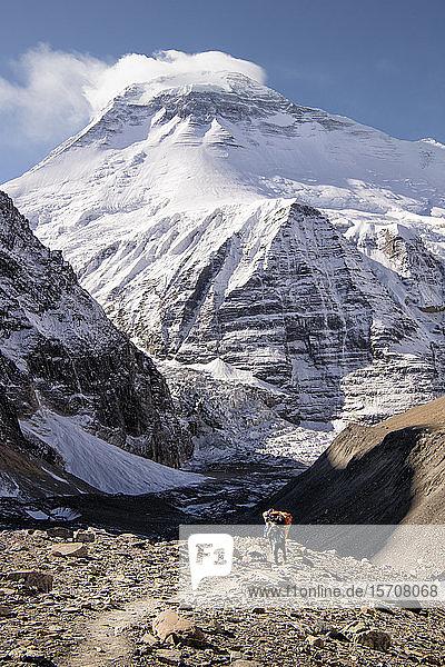 Chonbarden Glacier  French Pass  Dhaulagiri  Dhaulagiri Circuit Trek  Himalaya  Nepal