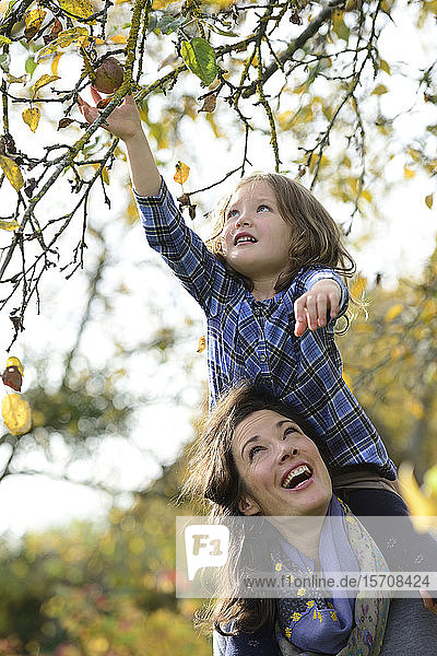 Daughter sitting on shoulders of her mother  reaching apple