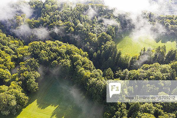 Deutschland  Bayern  Dorfen  Luftaufnahme von über grünem Wald schwebendem Nebel