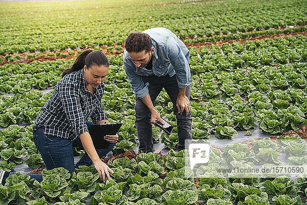 Mann und Frau mit Tablette und Zwischenablage im Salatfeld