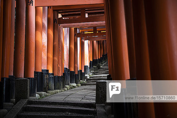 Japan  Präfektur Kyoto  Stadt Kyoto  Torii-Pfad des Fushimi Inari-taisha-Tempels