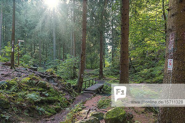 Deutschland  Extertal  Waldweg gegen die Sonne