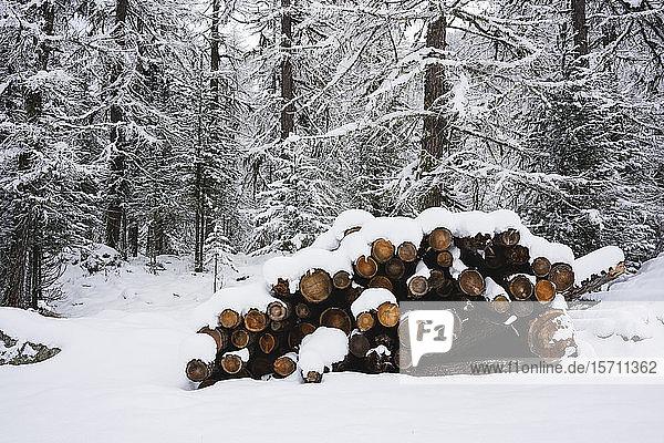 Vom Schnee bedeckter Wald  Engadin  Schweiz