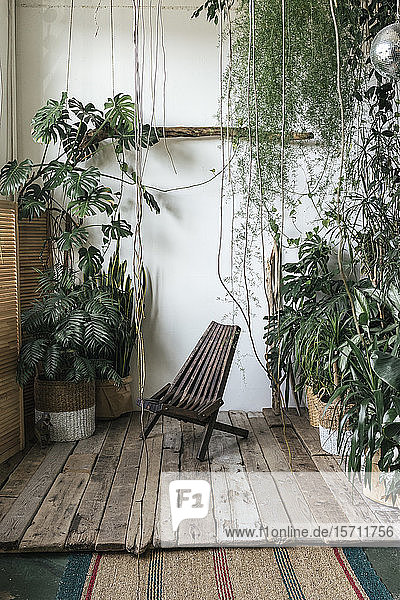 Wooden chair and plants in winter garden
