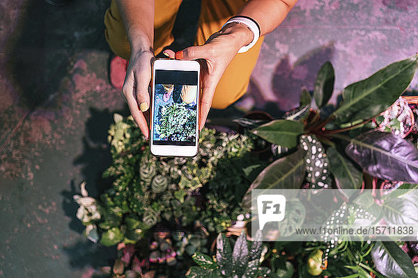 Close-up of woman taking smartphone picture of plants