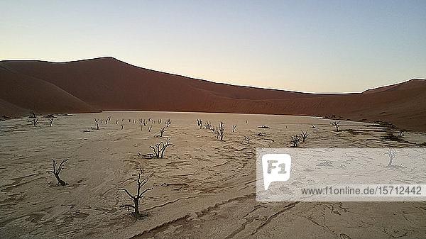 Deadvlei bei Sonnenaufgang  Sossusvlei  Namib-Wüste  Namibia