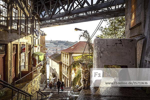 Ponte Dom Luis I  Porto  Portugal  Europe