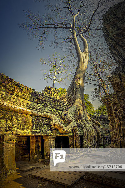 Ta Prohm Temple  Angkor Wat  Angkor  Cambodia  Asia