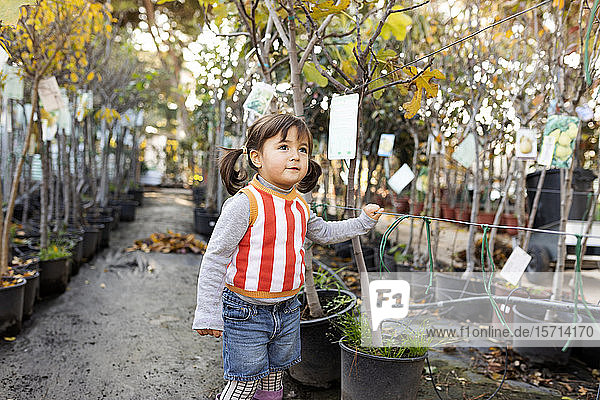 Portrait of little girl exploring potted trees in plant nursery