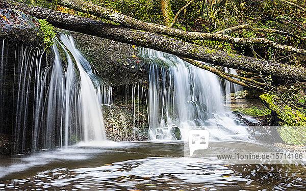 Deutschland  Baden-Württemberg  Kleiner Wasserfall im Schwäbisch-Fränkischen Wald
