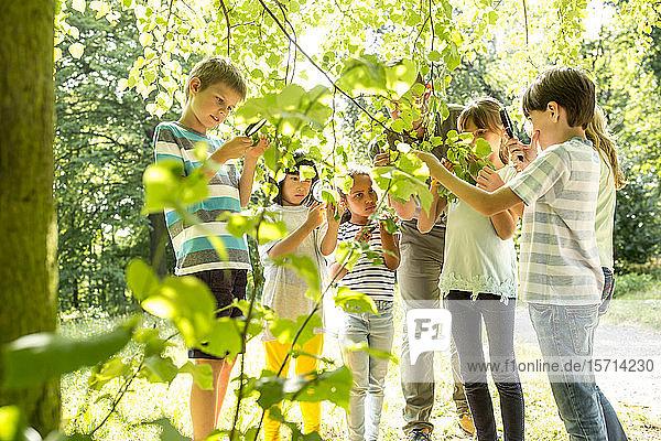 Schulkinder untersuchen mit ihrem Lehrer Blätter am Baum