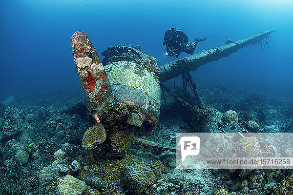 Palau  Diver exploring Japanese airplane wreck Jake sea plane underwater