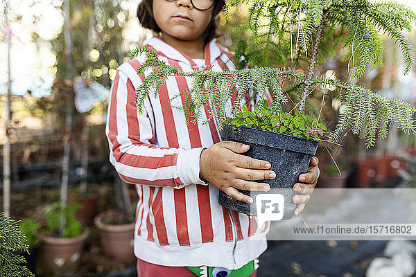 Hands of little boy with holding potted tree at plant nursery