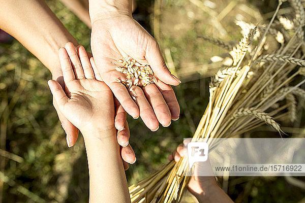 Kinderhände halten Weizenkörner