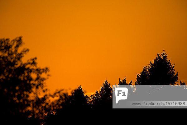 Deutschland  Würzburg  Bäume und orangefarbener Himmel bei Sonnenuntergang