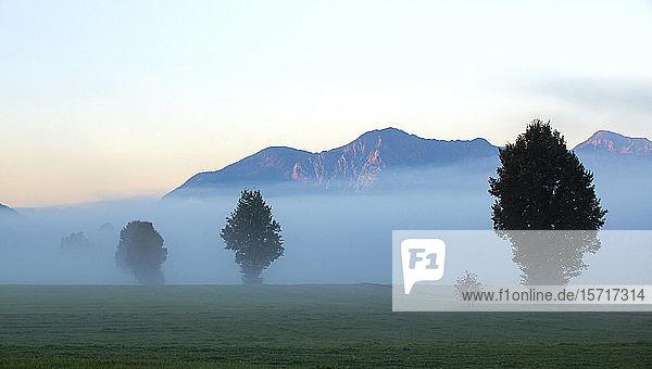 Deutschland  Bayern  Oberbayern  Benediktbeuern  Feld und Bäume im Morgennebel