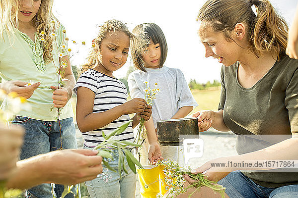 Lehrerin zeigt Kindern  wie man einen Kräutertee herstellt