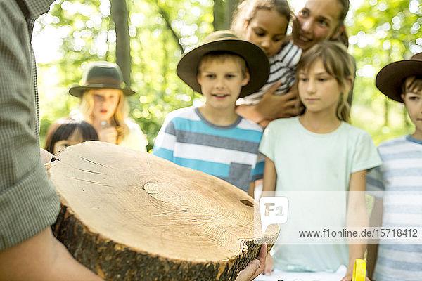 Schulkinder untersuchen Jahresringe eines Baumstammes