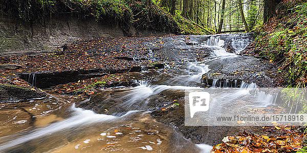 Deutschland  Baden-Württemberg  Klarer Bach fließt im Schwäbisch-Fränkischen Wald