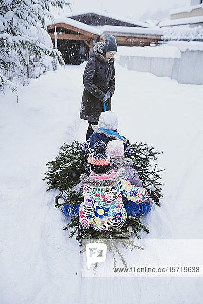 Tannenbaum ziehende Frau und drei Kinder auf Schlitten  Jochberg  Österreich