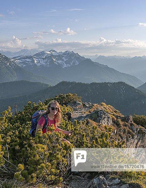 Mountain landscape  hiker on hiking trail the Herzogstand Heimgarten crossing  Upper Bavaria  Bavaria  Germany  Europe