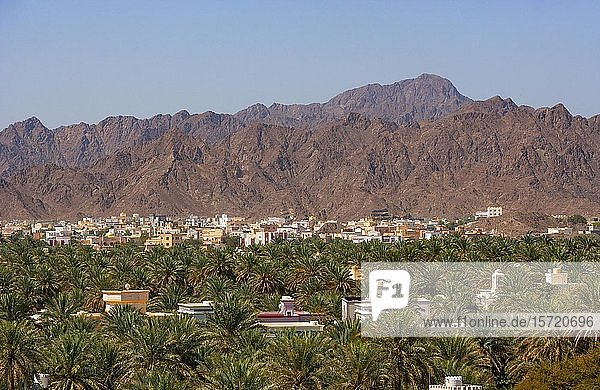 Stadtansicht  Palmenoase  Nizwa  Ad Dakhiliyah  Oman  Asien