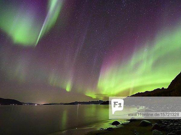 Polarlicht an der Küste  Nordlicht (Aurora borealis)  Lofoten  Norwegen  Europa