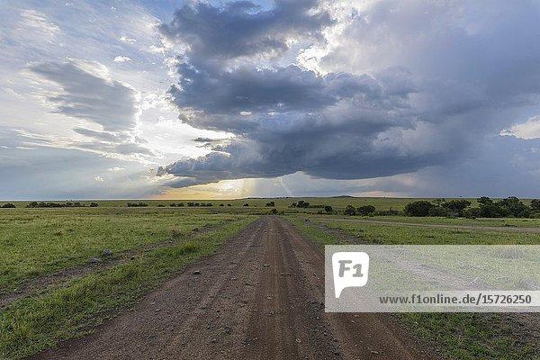 Road in savannah landscape  Masai Mara National Reserve  Kenya  Africa.