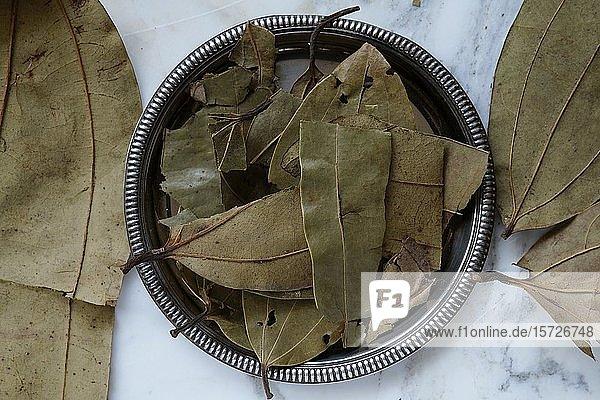 Getrocknete Zimtblätter  Blätter in einer Schale  Zimt (Cinnamomum)  Indien  Asien