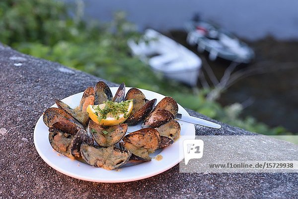 Plate of mussels from the O'Dowd's pub at Rounstone harbour  west coast  County of Galway  Connemara  Republic of Ireland  North-western Europe.