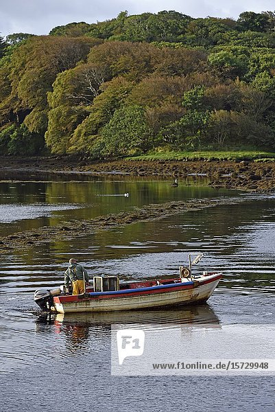 Fisherman leaving the Clifden's harbour  west coast  County of Galway  Connemara  Republic of Ireland  North-western Europe.