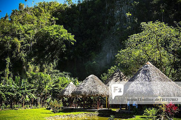 Open houses with guano ceiling  installed in the style of the old African villages in Palenque de los Cimarrones  a kind of living museum that  between legend and history  makes the passing of Afro-descendants through western Cuba. Vinales Valley  Republic of Cuba  Caribbean  Central America.