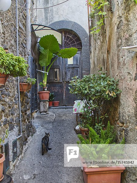 Cat in a small courtyard  Bracciano  Metropolitan City of Rome  Italy.