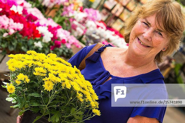 Woman purchasing chrysanthemum plants  purchased in English Garden centre.