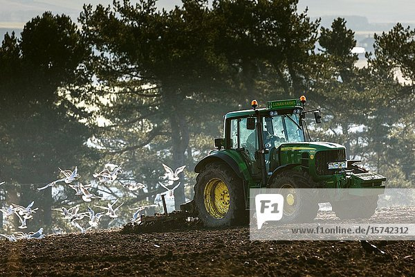 Spring plowing at fields overlooking Lunan Bay. Montrose. East Coast Scotland UK.