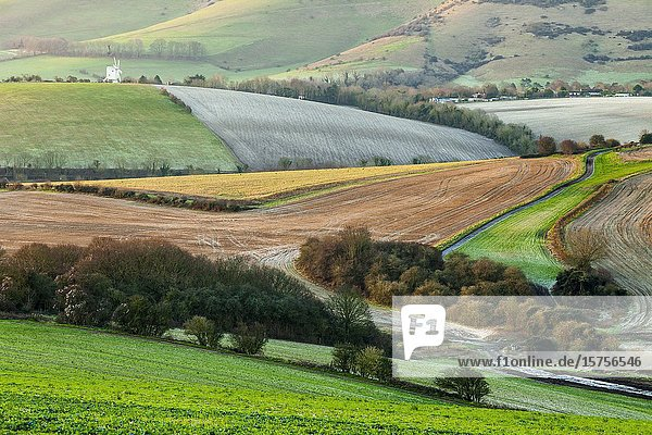Winter morning in South Downs National Park  East Sussex  England.