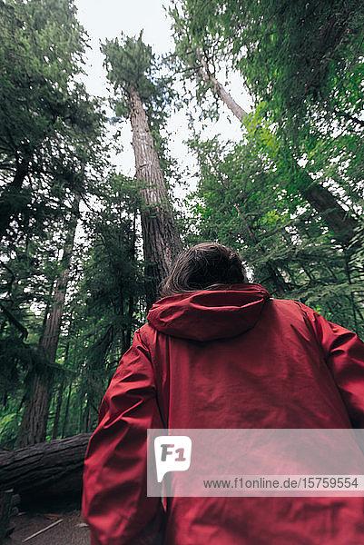 Frau schaut zu einem Baum im Wald hinauf  Cathedral Grove  Britisch-Kolumbien  Kanada