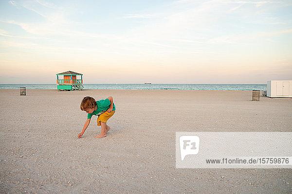 Toddler picking seashells on beach  Miami beach front  Florida  USA