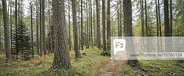 Woods  Vrsic Pass  Julian Alps  Triglav National Park  Upper Carniola  Slovenia