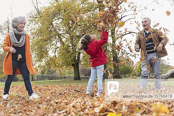 Verspielte Großeltern und Enkelin werfen Herbstblätter im Park