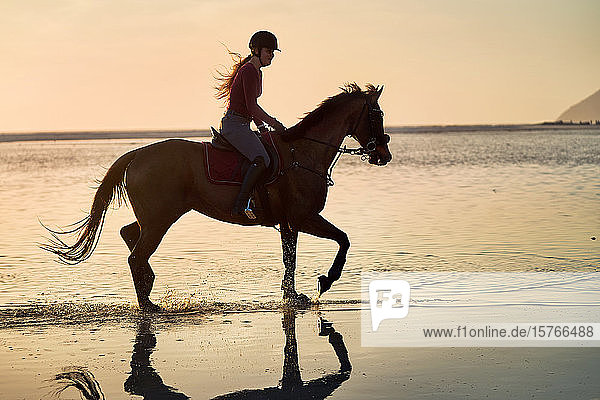 Young woman horseback riding in sunset ocean surf